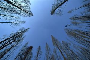 800px-Trees-sky